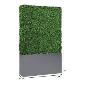 EU705 8' Boxwood Hedge